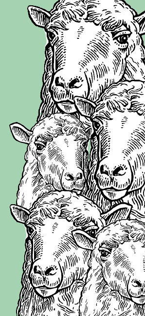 An illustration of a flock of sheep