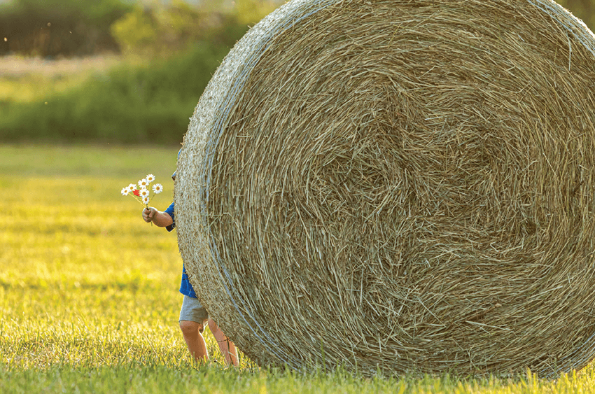 A small child hides behind a hay bail holding a small boquet of wildflowers.