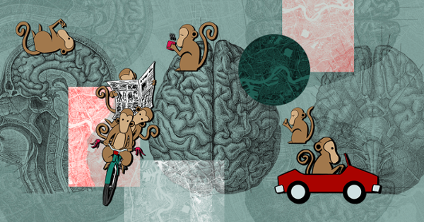 Mensa Brain or Monkey Brain — Which Is at the Helm of Our Voluntary Activities?