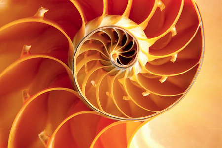 Nautilus image